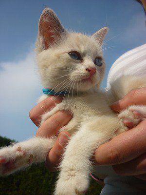 Un magnifique chat qui a besoin de com's ♥