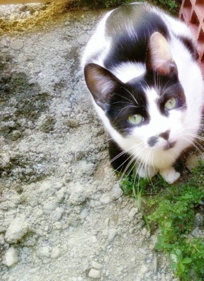 Mon chat me fixe dans les yeux ? :D