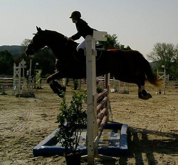 saut d'obstacle !!