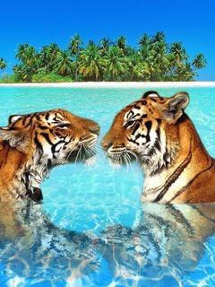 c'est trop mimi les tigres !!