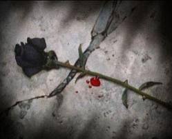 rose noire .