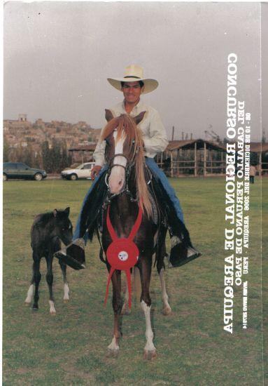 Ce mon cheri gonzalo...dans un chevaux peruvianne de paso