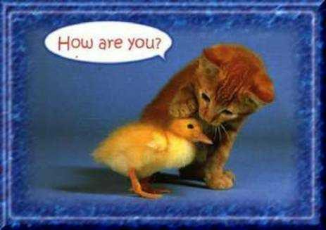 Chat et canard