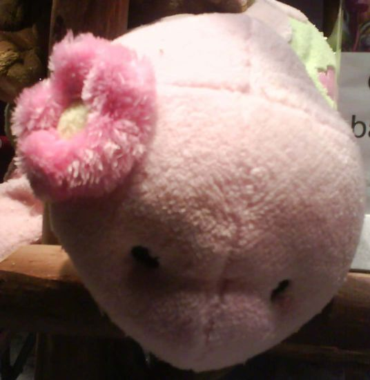 pink turttle