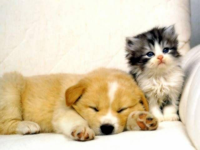 P'tit chiot & chaton, mimi tous les deux !!