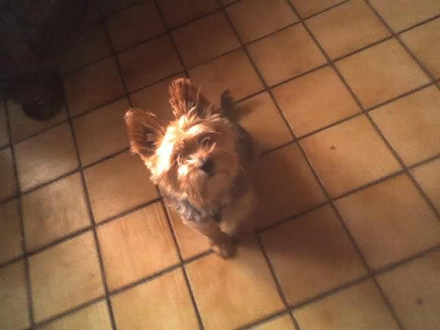 mon chien rambo