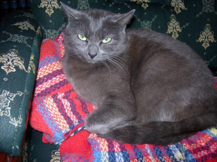 La cé Titite, mon ancienne minette ,morte ya 2 ans.