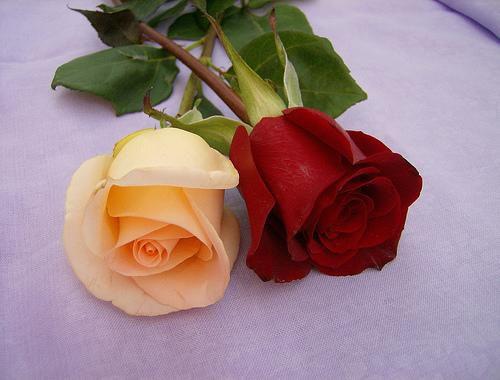 j'aime les rose waw :)