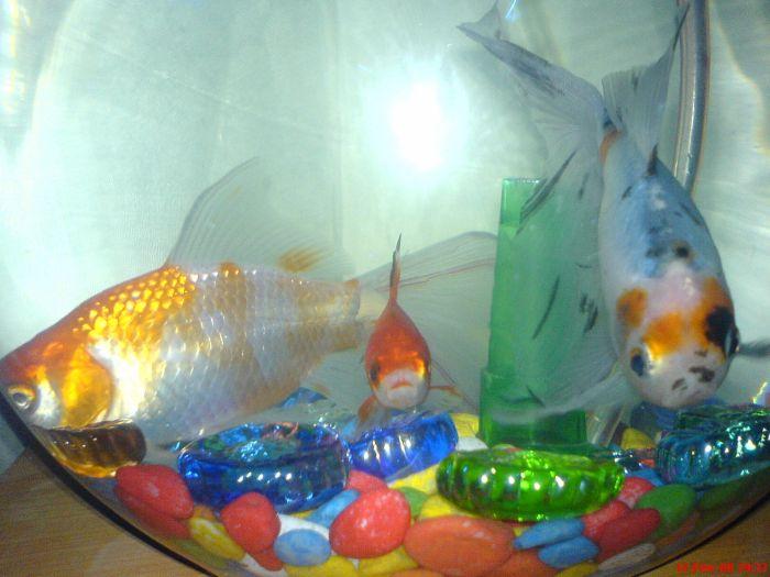 mé poisson