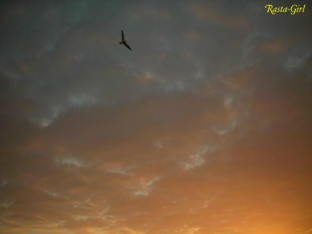 Oiseau dans un degradé de ciel au lever de soleil