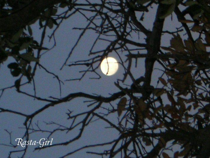 Lune deriere Branche