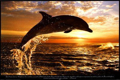mOn animal préféré dauphin et les chiens