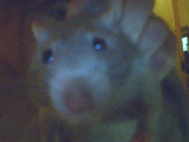 mon ratich (dedicasse a louloute ki le surnome ratatouille)