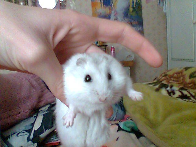 mon hamster (bibi)