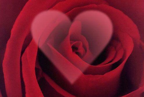 lè roses j'adore !