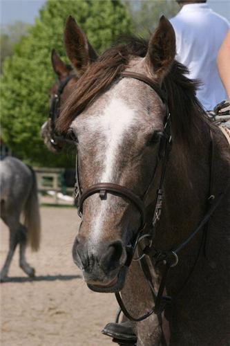 c est une jument de mon centre equestre elle sappelle paline