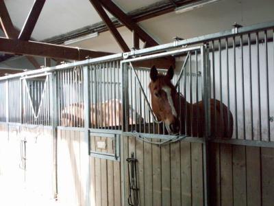 se sont des poneys de l equitation