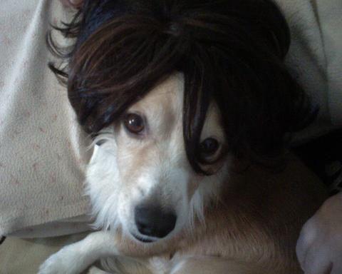 mon petit chien adoré avec la péruque lol