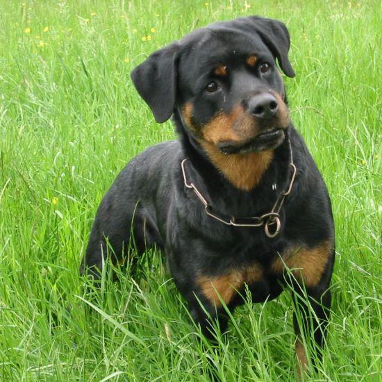 mon beau et manifique chien