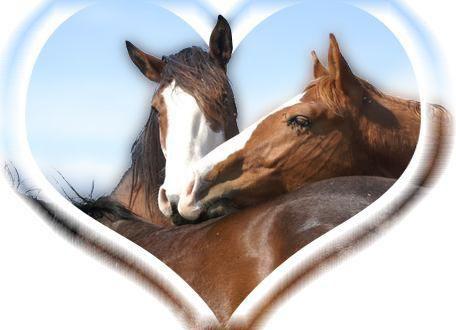 i love the horse
