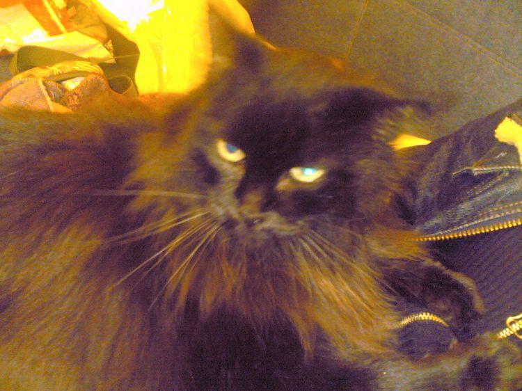 tres beau chat il a une histoir lol