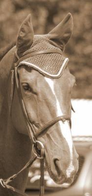 un cheval unique*.un cavalier unique *.un homme unique
