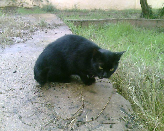 le chat de mery