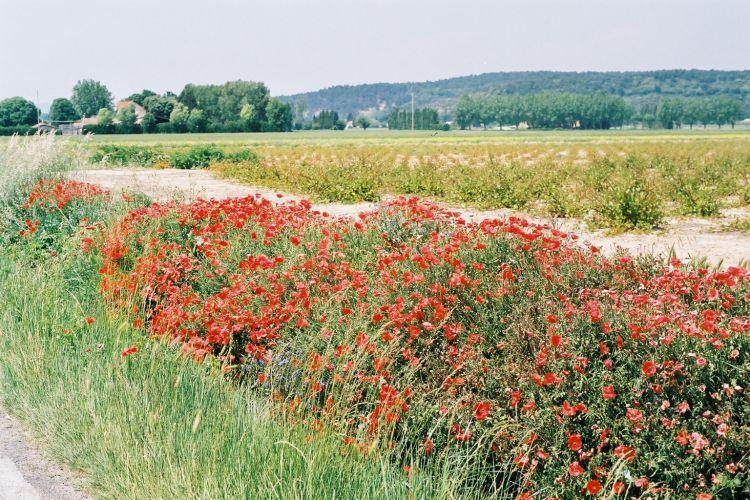 Image Printanière... du Vaucluse...
