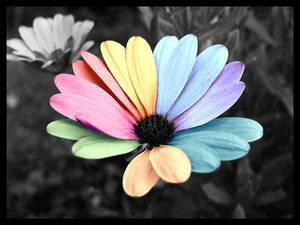 La vie n'est pas rose mais multicolore