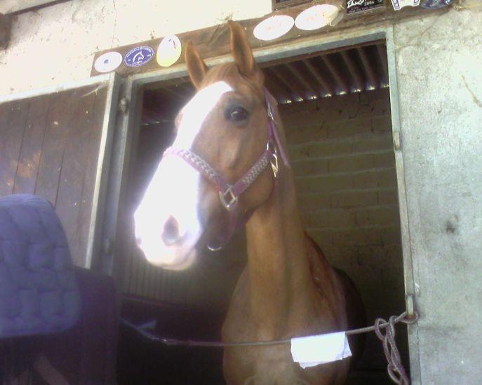 Encore mon bébé de cheval