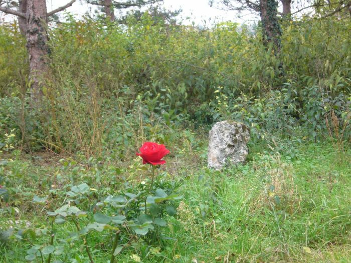 rose..rock ...