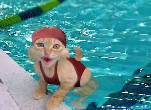 mon chat dans ma piscine