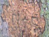 graver dans notre arbre