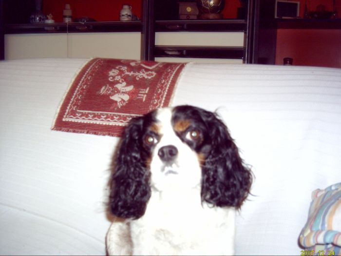 mon chien