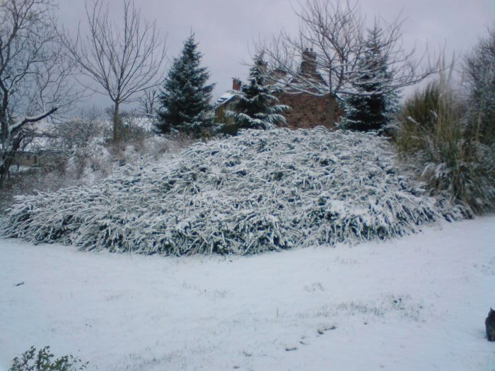 neige-5cm (le 24/03/08) à Combres
