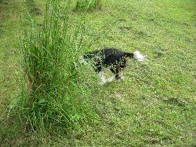 mon chien se cache