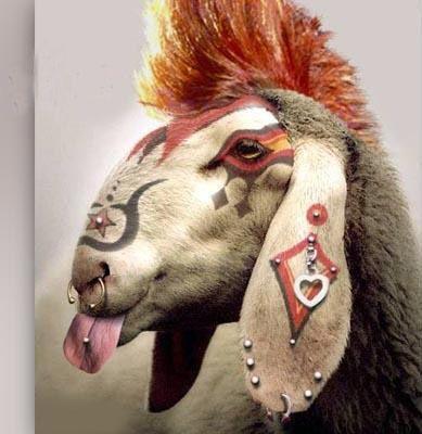 Val le mouton bêbê punk!