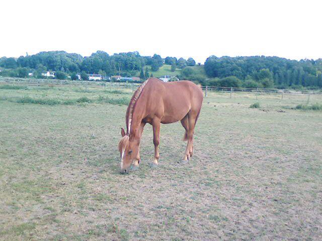 Mon cheval César