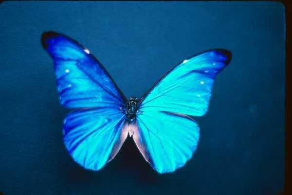 Butterfly <3 Cherchez pas =)-