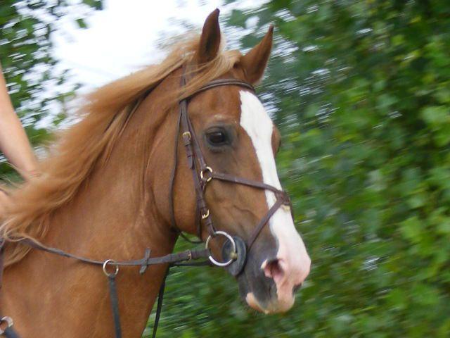 mon bébé cheval