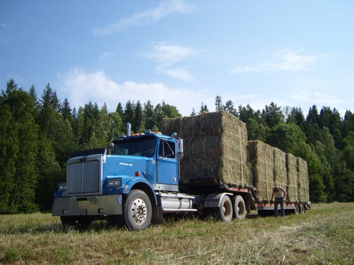 Blue truck, Western star 570 Horse Power, for hay balls ;) !
