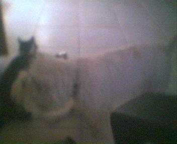 Mon chien embetant mon chat tranquille!