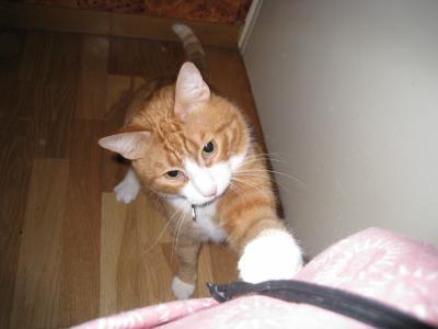 Mon amour ! Mon chat...