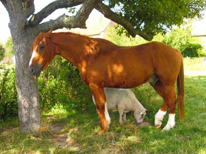 sOurir de mOtte / Selle Français / 25ans / mOn ancien cheval