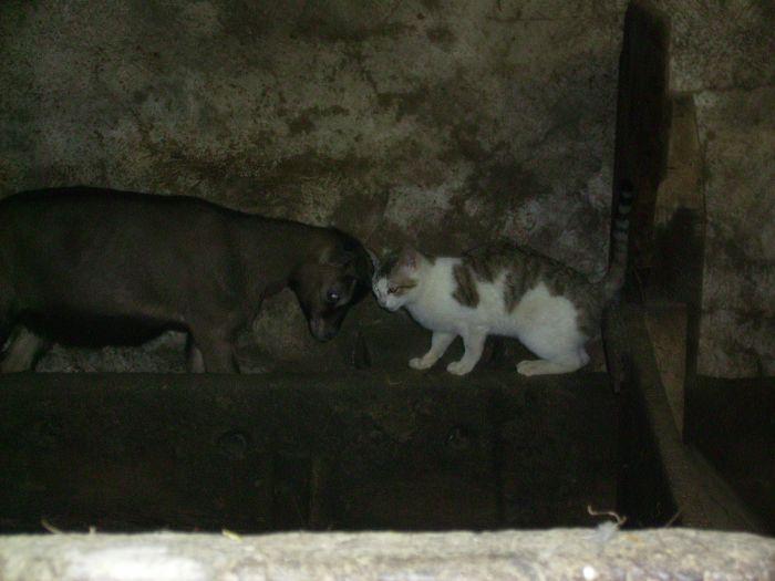 chevreau vs chat