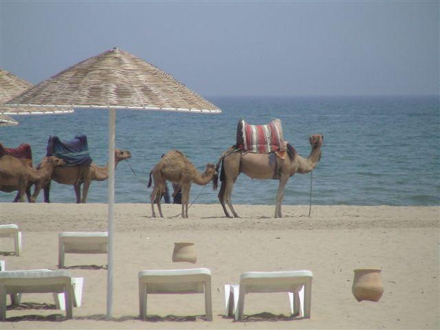 Maroc (LL)