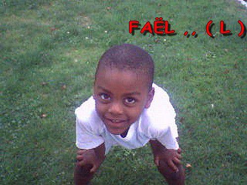 FAEL ,, ( L )