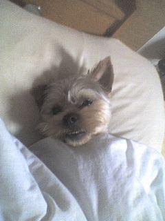 mon ti chien ^^