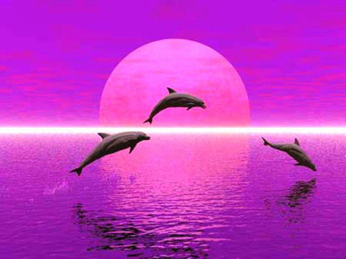 dauphins ,emblème d'anthony