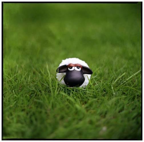 le petit mouton dans la prairie